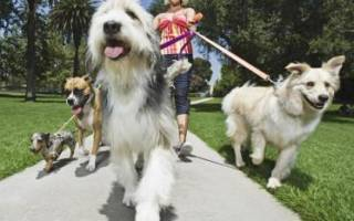 Как отучить собаку подбирать наулице?