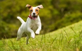 Как приучить собаку не убегать