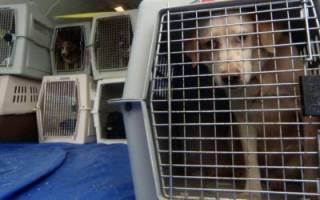 Как перевозить собаку в самолете?
