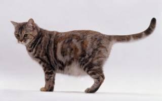 Как узнать, беременна ли кошка?