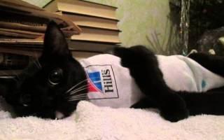 Правила питания стерилизованных кошек и котов