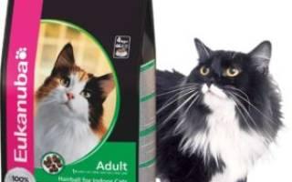 Обзор корма для кошек Eukanuba