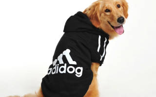Одежда для собак: зачем нужна и как правильно подобрать