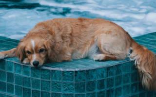 Как правильно мыть собаку?
