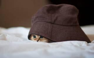 Почему кошка прячется?