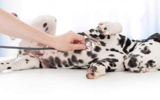 Полезно знать о щенках: Здоровье и уход