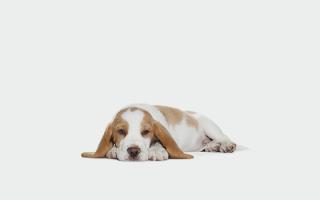 Как выбрать ветеринарного врача длясобаки?