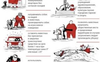 Правила выгула крупных собак