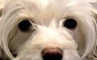 Цирроз печени — как лечить у собак