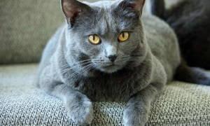 Кариес зубов у кошек