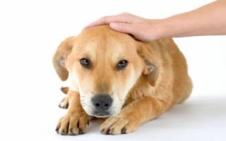 Дисбактериоз кишечника — как лечить у собак