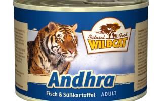 Обзор корма для кошек Wildcat
