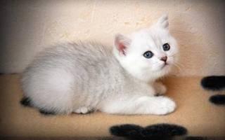 Что нужно котенку при появлении в доме?