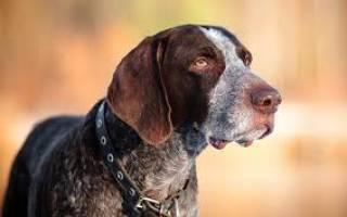 Как обучить свою собаку охоте
