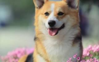 Список  кличек для собаки девочки