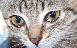 У кошки слезятся глаза. Что делать?
