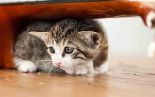 Что делать, если кошка боится людей?