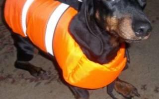Как выбрать спасательный жилет для собаки?