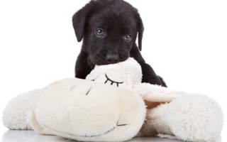 Как заставить собаку прекратить кусаться