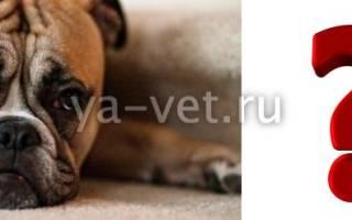 Энтерит неспицефический, Энтероколит, Колит — как лечить у собак