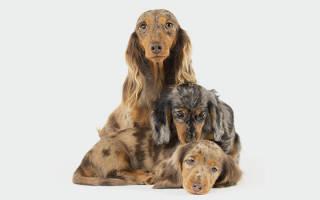 Как отучить щенка лаять надругих собак?
