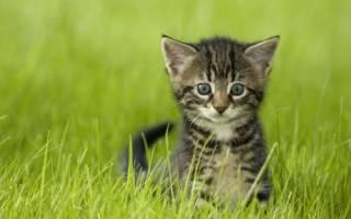 Имена по породам котов