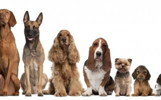 Как выбрать кличку для щенка: основные правила и требования