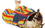 Самые популярные гаджеты для кошек