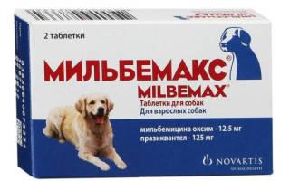 Глистогонное для собак: список хороших средств
