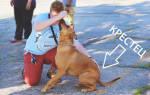 Как научить собаку команде «сидеть»