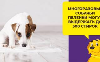 Питание щенков средних размеров