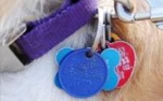Жетон-адресник для собаки