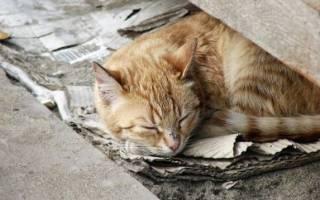 Как подружить двух кошек?