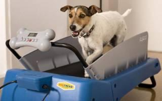 Беговая дорожка для собаки