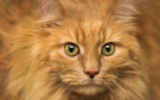 Почему нельзя долго смотреть кошке в глаза?