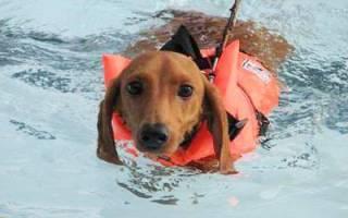 Бассейн для собак: развлечение или необходимость?