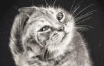 Почему кошка часто трясет головой?