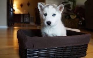 Как подготовить квартиру к появлению щенка