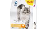 Как кормить кошку с чувствительным пищеварением?