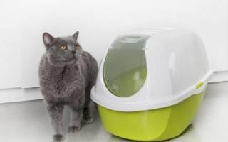 Как выбрать туалет-домик для кошки?