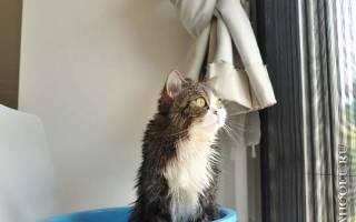 Как обеспечить безопасность кота в квартире?