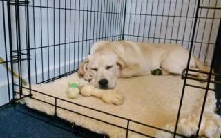 Как приучить к клетке взрослую собаку
