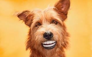 Как почистить зубы собаке?