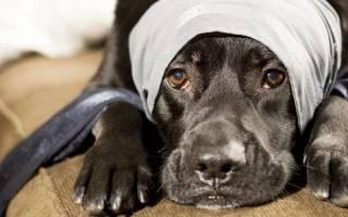 Наружное кровотечение и — как лечить у собак