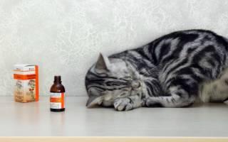 Почему кошки любят валерьянку?