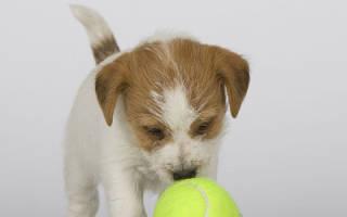 Питание щенков маленьких размеров