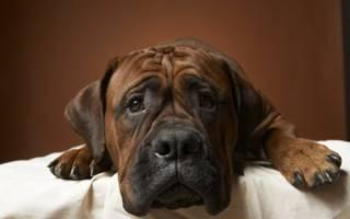 Проблемы пищеварения у собак
