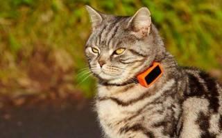 Ошейник с GPS-трекером для кошки