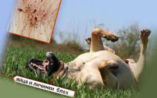 Прак-тик для собак — инструкция по применению