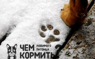 Как защитить лапы собаки от реагентов?